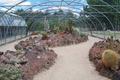 Real Jardín Botánico Juan Carlos I (RPS 07-06-2014) invernadero de cactus.png