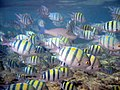 Red sea-reef 3291.jpg