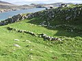 Remains of Viking Longhouse at Hushinish - geograph.org.uk - 563042.jpg