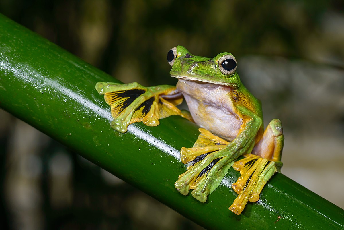 frog Frog connects people across the uk with local services and organisations that can help every member of a community lead a happy, healthy and long life.