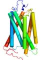 Rhodopsin numbering.png