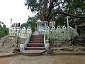 Ridi Vihara-Ficus religiosa (2).jpg