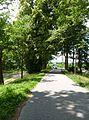 Rožmberk, památné stromořadí okolo hráze (2).JPG