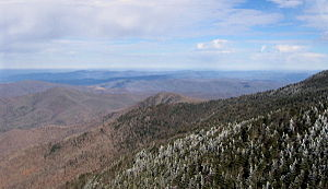 Southern Appalachian spruce–fir forest - View across the slopes of Roan Mountain showing the contrast between the dark green spruce–fir canopy (right) and the dull brown deciduous winter canopy (left)