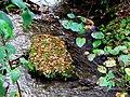 Roaring Fork Falls Black Mountain Campground Pisgah Nat Forest NC 4338 (37917001062).jpg