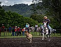 Rodeo Event Calf Roping 30.jpg