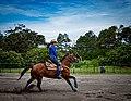Rodeo in Panama 01.jpg