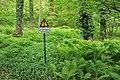 Rombergpark-100516-13147-Bergschaeden.jpg