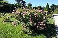 Rose garden @ Parc de Bagatelle @ Paris (28278048242).jpg