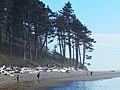 Ruby Beach Washington coast.jpg