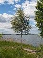 Russia. Elektrostal. Pond Sluchayny. img-061.jpg