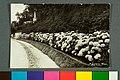 S. Lourenço Parque. Phot Emilio (1) - 1-21920-0000-0000, Acervo do Museu Paulista da USP.jpg
