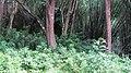 Safari @ Anamalai Tiger Reserve - panoramio (6).jpg