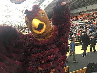 The Hawk (Saint Josephs University mascot)