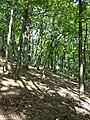 Schlossberg im Schwarzwald sl7.jpg