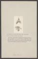 Sepia - Print - Iconographia Zoologica - Special Collections University of Amsterdam - UBAINV0274 005 09 0039.tif