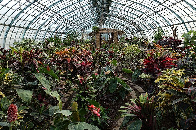 File:Serre des crotons @ Greenhouse @ Jardin des Serres d'Auteuil @ Paris 16 (32307691453).jpg