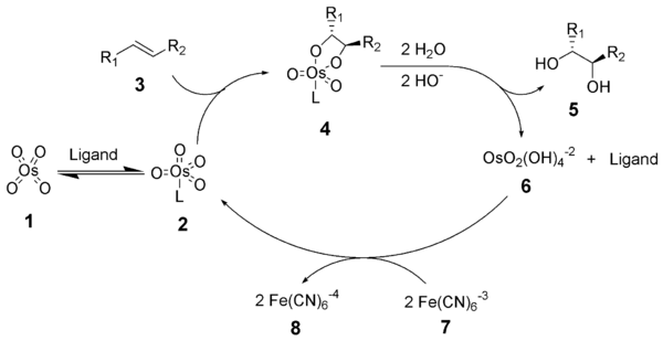 The reaction mechanism of the Sharpless dihydroxylation
