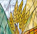 Shiloh Stained glass Yossef wheat.jpg