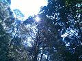 Shivapuri National Park (8).jpg