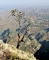 Simien Mountains National Park 01.jpg