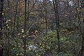 Slate Run-Slate Run Creek through a mixed Fall Forest 1.jpg