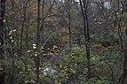 Slate Run-Slate Run Creek through a mixed Fall Forest 1.jpg