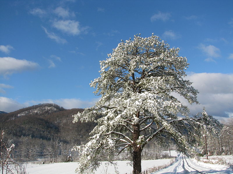 File:Snow in old fort.JPG