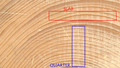 Softwood endgrain marked.png