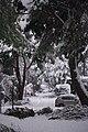 Somosaguas Norte Filomena 13.jpg