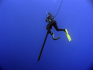 A photo of a spearfisherman hunting dogtooth-t...