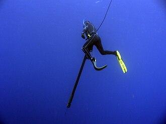 Spearfishing - Spearfisherman hunting Yellowfin tuna in the Ryukyu Islands