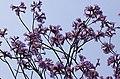Spring in Delhi 1 (2320526840).jpg