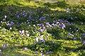 Spring in London (7173037562).jpg