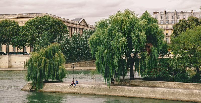 File:Square du Vert-Galant, Paris September 2013.jpg
