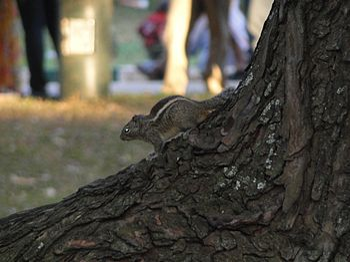 Squirrels1.jpg