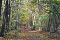 Staatsforst Rantzau - Waldweg im Herbst 02.jpg