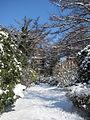 Stadtpark Hamburg im Winter 3.jpg