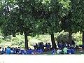 Starr-151029-2757-Calophyllum inophyllum-keiki school group lunch in shade-Maui Nui Botanical Garden Kahului-Maui (26216261631).jpg