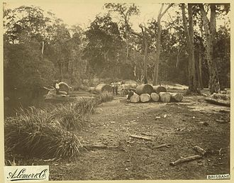 Sunshine Coast, Queensland - Log rafting on the Noosa River, 1889