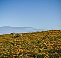 Staying Still 71 - Flowerscape 2.jpg