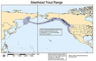 Steelhead trout Fresh-water species of fish