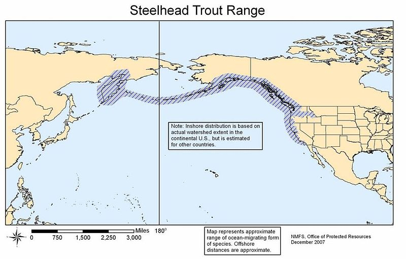 Steelhead Global Range Map.JPG