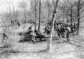 Stellungsbezug der Geschütze im Wald - CH-BAR - 3239549.tif