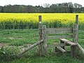 Stile and Rapefield, Bradney, Shropshire - geograph.org.uk - 414180.jpg