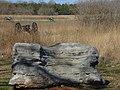 Stones River National Battlefield in Spring 5.jpg