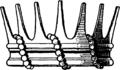 Ströhl-Rangkronen-Fig. 51.png