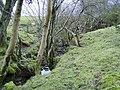 Stream and surrounding woodland - geograph.org.uk - 325511.jpg