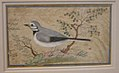 Study of a Bird MET sf1985-2.jpg