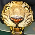 Stuffed tiger head (6104059414).jpg